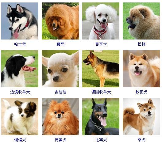 狗狗品种名字大全,狗狗名字大全