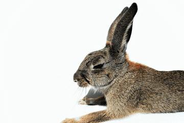 属兔人的性格: